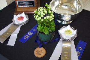 National Shows
